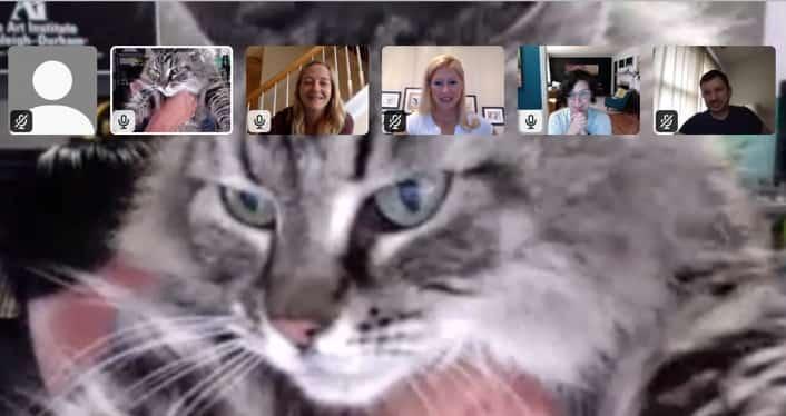 Screenshot a Rivers team member's cat during a video call